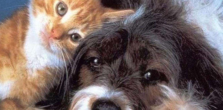 Mitos peligrosos sobre la esterilización de mascotas que pueden provocar mas problemas que soluciones