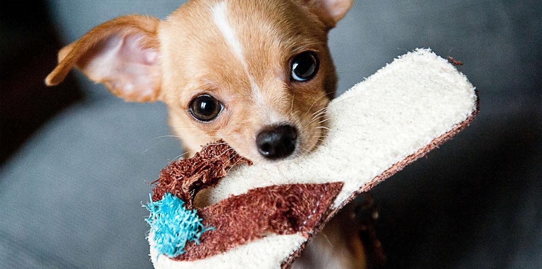Tienes un cachorro en casa!? Te damos consejos de como mejorar al máximo la convivencia!