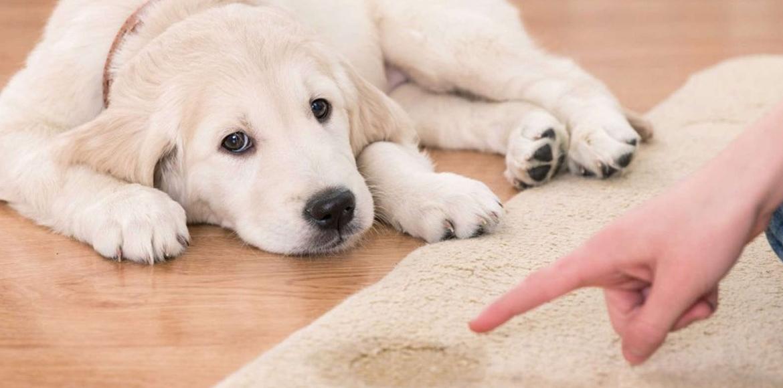 Tu perro hace sus necesidades por todas partes… ¡No pierdas la calma! Aquí van algunos consejos para solucionarlo