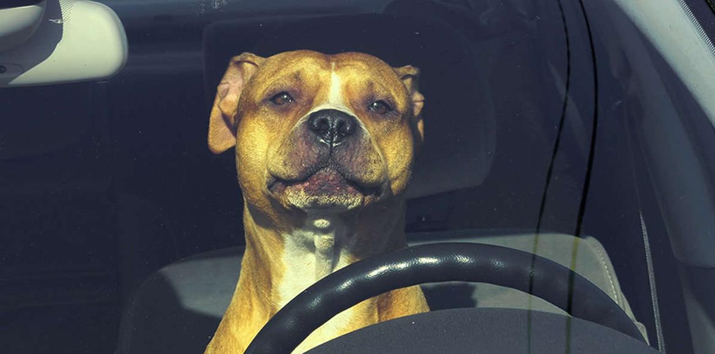Alerta Mascotas!! Jamás hagas ésto con tus animales si realmente valoras su vida