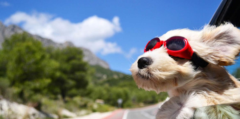 Cómo viajar con perros en el auto de forma segura
