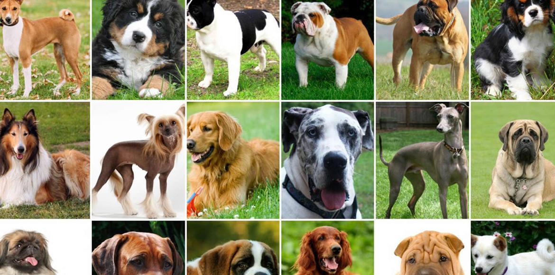 Entérate cuáles son los perros que ladran menos – Parte III