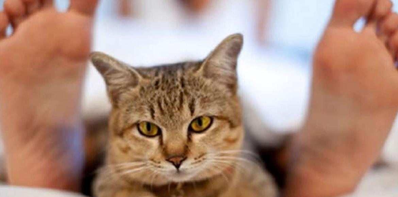 5 motivos por los cuales a los gatos duermen cerca de tus pies