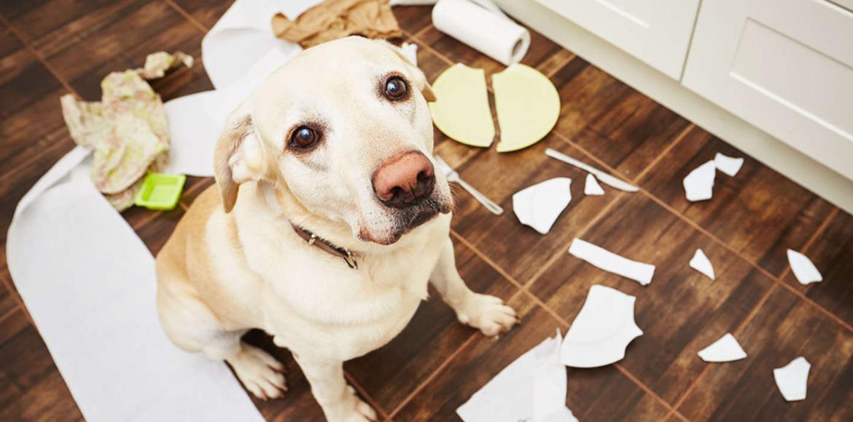 Como dejar a tu perro solo en casa y no morir en el intento