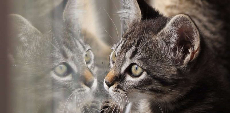 Como dejar a tu gato solo en casa y no morir en el intento