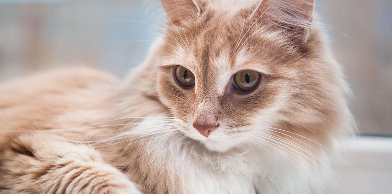 El Pelo de Gato: Consejos para su tratamiento y control
