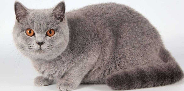 El riñón poliquístico en gatos. Síntomas Diagnóstico y Tratamiento