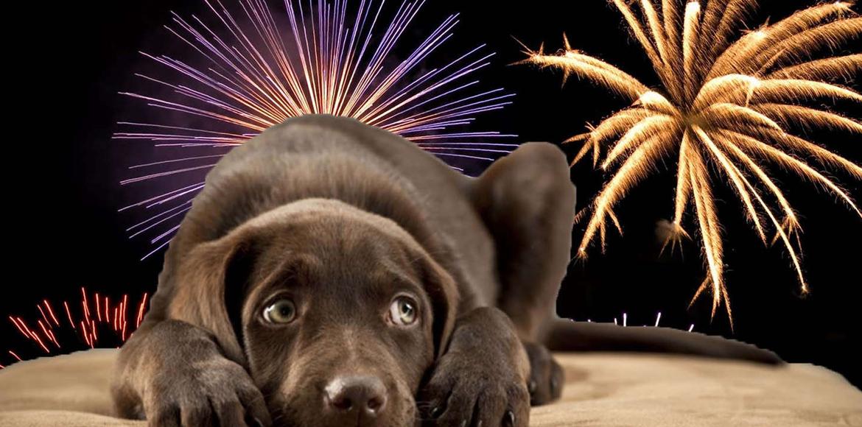 Estrés Animal por las Fiestas ¿qué hacer para que nuestros animales no sufran mientras nosotros celebramos?