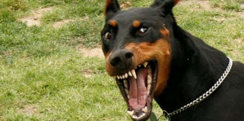 Agresividad Canina: Causas y Prevención