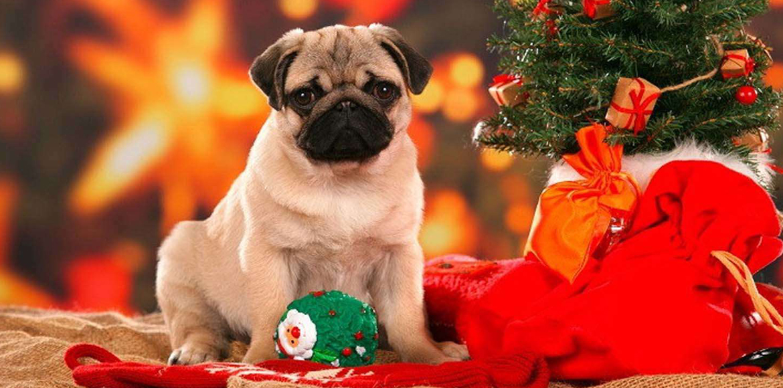 Alimentos peligrosos para perros en nuestras cenas de navidad y de fin de año