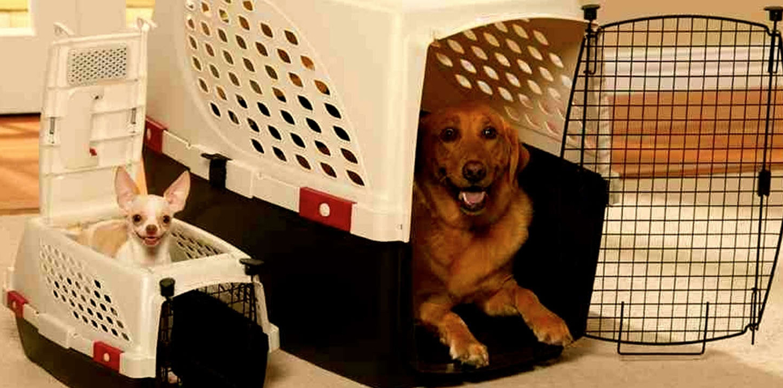 Como acostumbrar al perro al transportín de viaje
