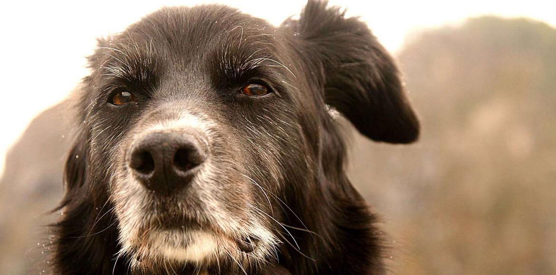 ¿Cómo debe ser la alimentación de perros adultos?