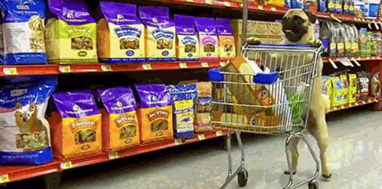 Utensilios y productos caninos: te presentamos los imprescindibles