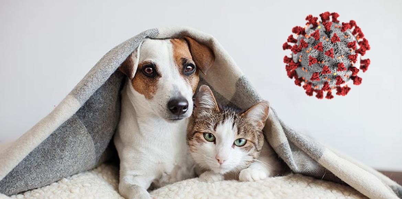 Mascotas y COVID-19 – Recomendaciones para su cuidado durante esta Pandemia