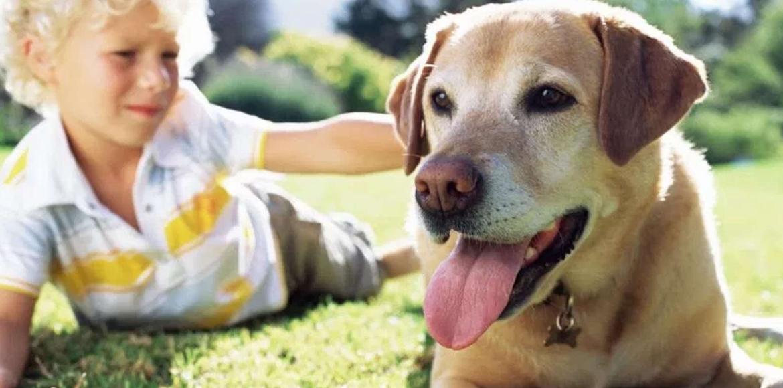 Cómo elegir un animal de compañía para tus hijos