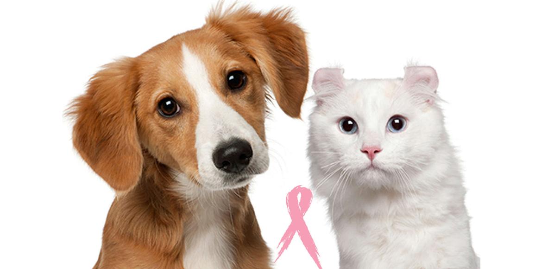 Dolor, hinchazón o secreciones pueden indicar cáncer de mama en mascotas. Entérate como prevenirlo!